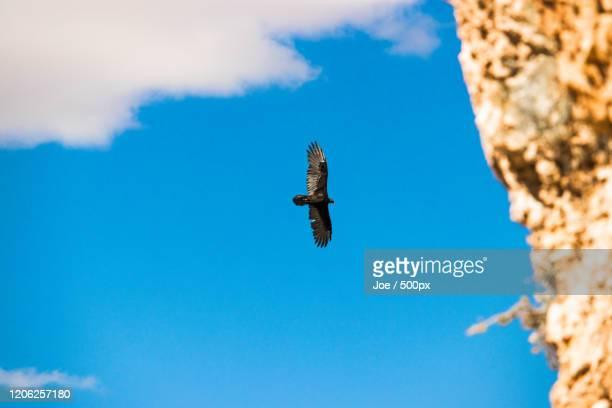 low angle view of bird in sky, arizona, usa - arizona bird stock pictures, royalty-free photos & images