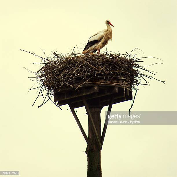 Low Angle View Of Bird On Nest Against Clear Sky