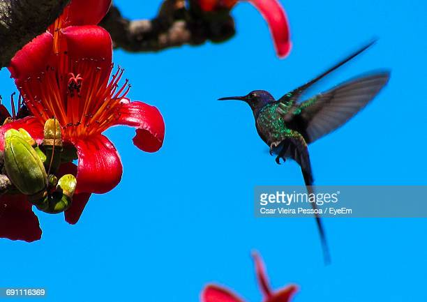 Low Angle View Of Bird On Red Flower Against Clear Sky