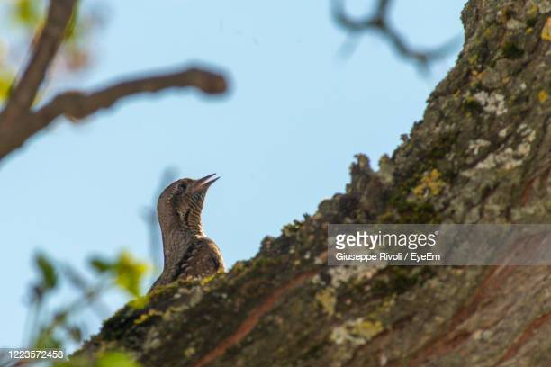 low angle view of bird perching on branch against sky - nightingale stock pictures, royalty-free photos & images