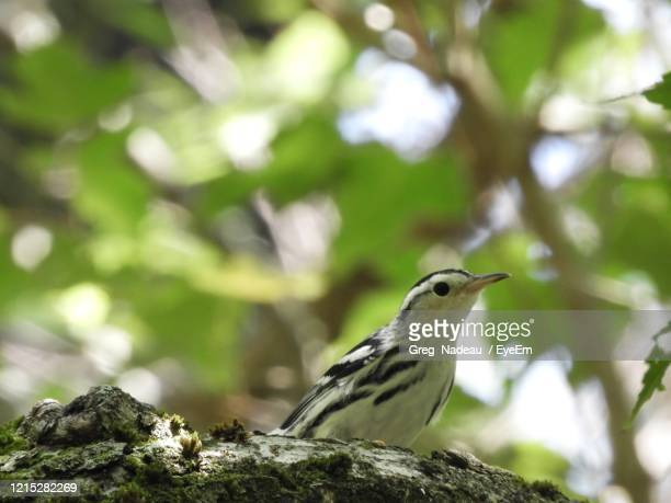 low angle view of bird perching on branch - greg nadeau stock pictures, royalty-free photos & images