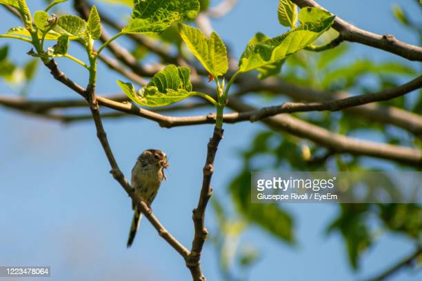 low angle view of bird perching on branch - nightingale stock pictures, royalty-free photos & images