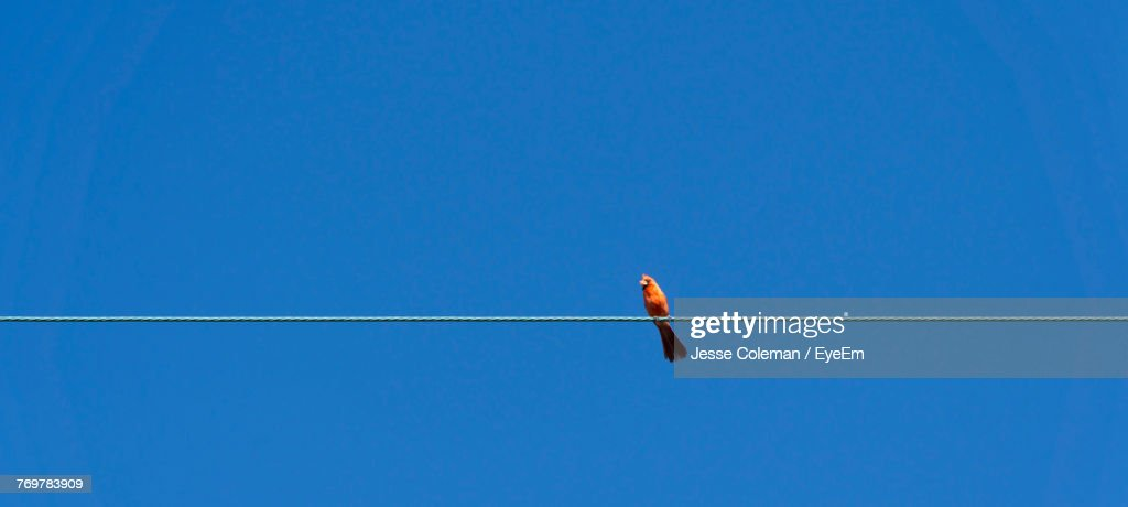 Low Angle View Of Bird Perching On Cable Against Clear Blue Sky : Foto de stock