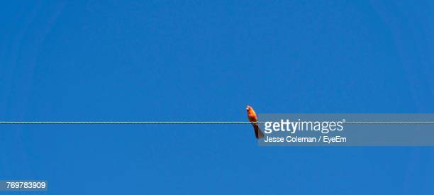 low angle view of bird perching on cable against clear blue sky - jesse coleman imagens e fotografias de stock
