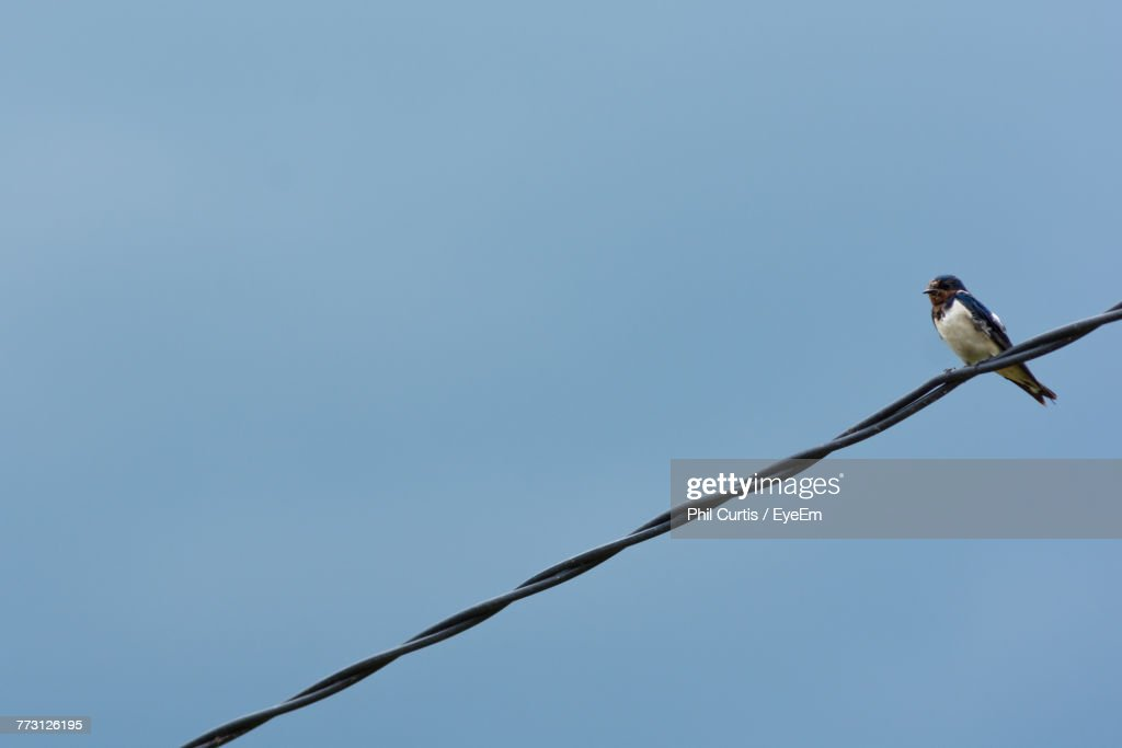 Low Angle View Of Bird Perching On Cable Against Clear Blue Sky : Stock Photo