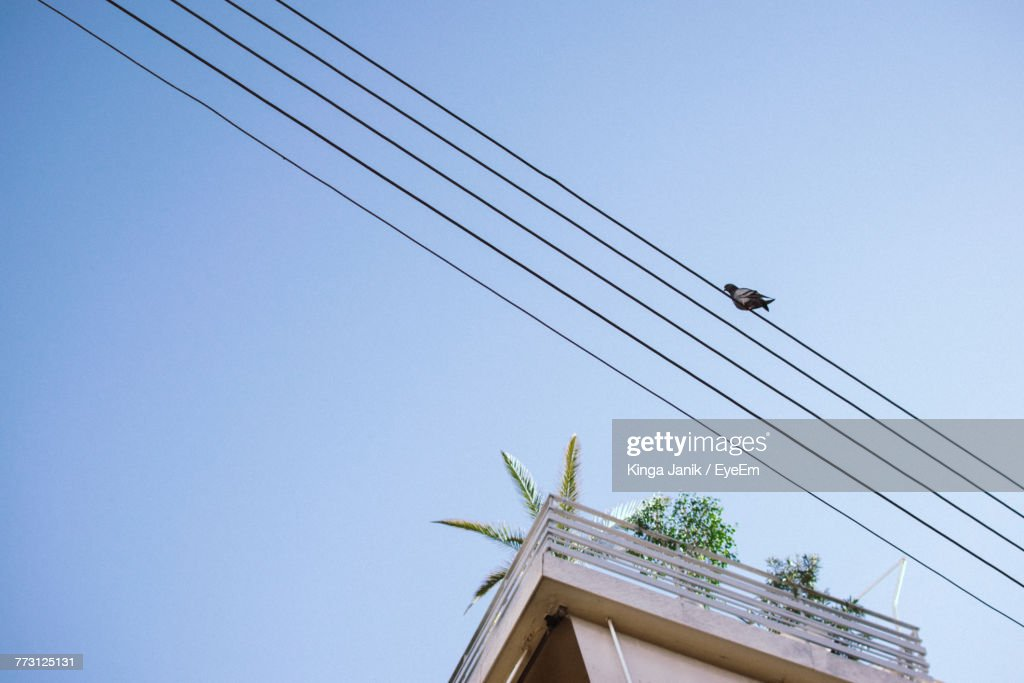 Low Angle View Of Bird Perching On Cable Against Clear Sky : Photo