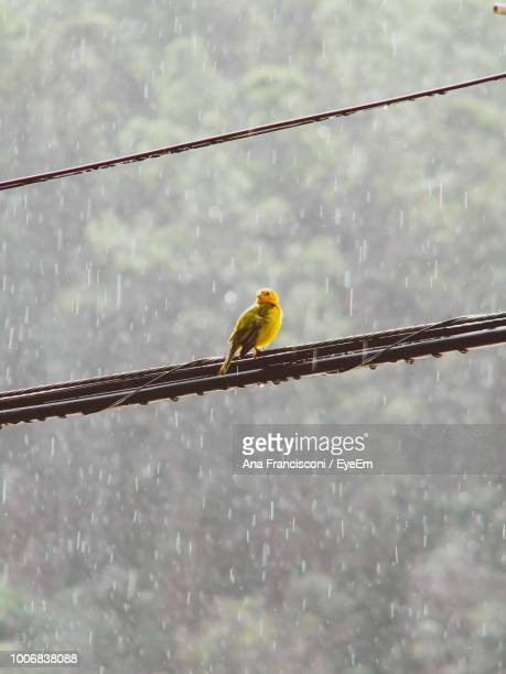 Low Angle View Of Bird Perching On Cable Against Mountain
