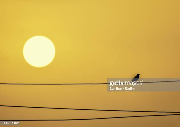 low angle view of bird perching on cable against orange sky - yellow perch stock photos and pictures