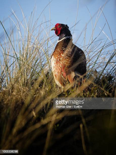 Low Angle View Of Bird Perching On Grass