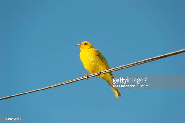 Low Angle View Of Bird Perching On Metal Against Clear Blue Sky