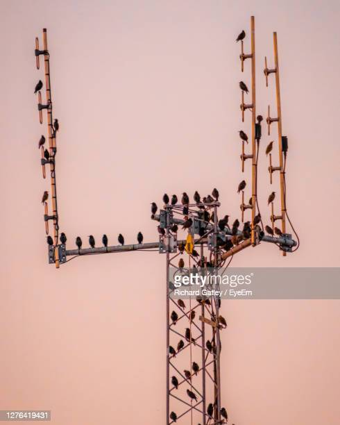 low angle view of bird perching on pole against sky - chichester stock pictures, royalty-free photos & images