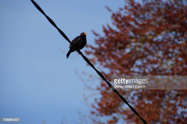 Low Angle View Of Bird Perching On Power Line
