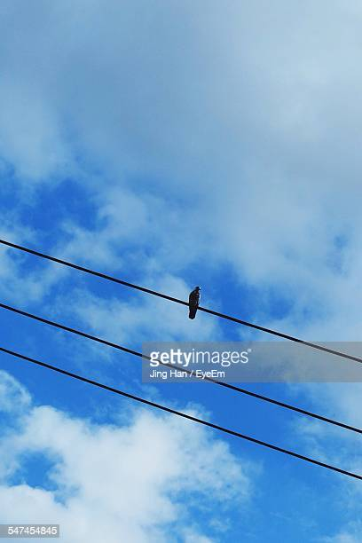 Low Angle View Of Bird Perching On Power Lines Against Sky