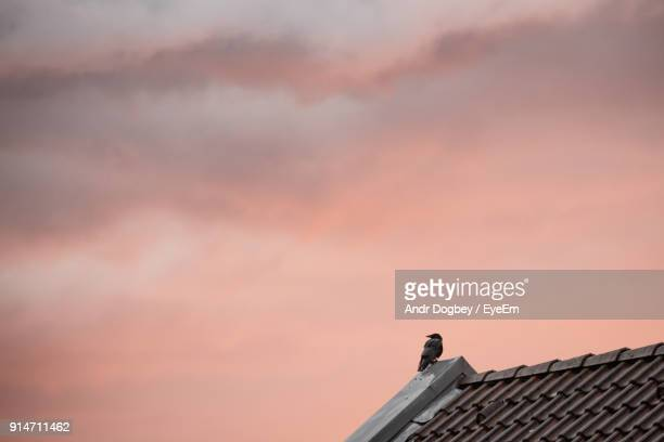 low angle view of bird perching on roof against sky - high section stock pictures, royalty-free photos & images