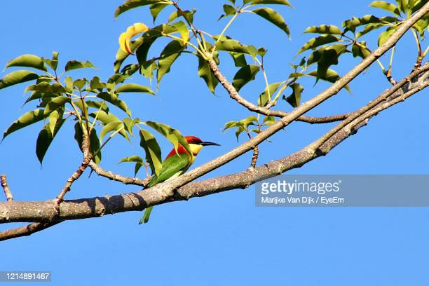 low angle view of bird perching on tree against sky - van dijk stock pictures, royalty-free photos & images