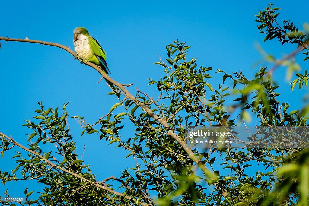 Low Angle View Of Bird Perching On Tree Against Sky : Stock Photo