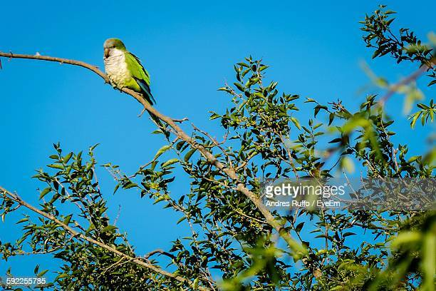 low angle view of bird perching on tree against sky - andres ruffo stock-fotos und bilder