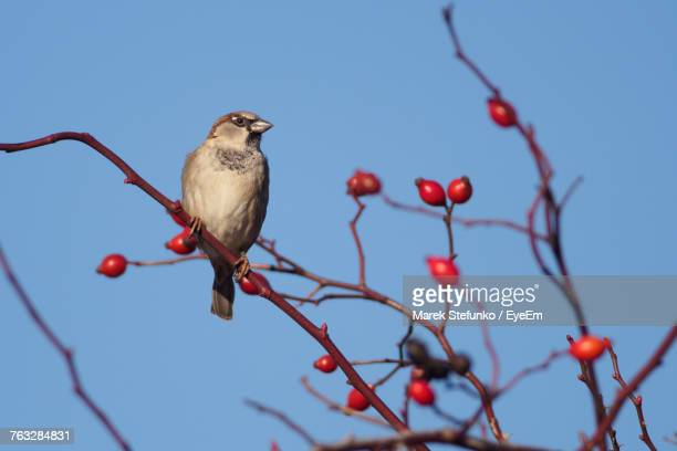 low angle view of bird perching on tree against sky - marek stefunko stock pictures, royalty-free photos & images