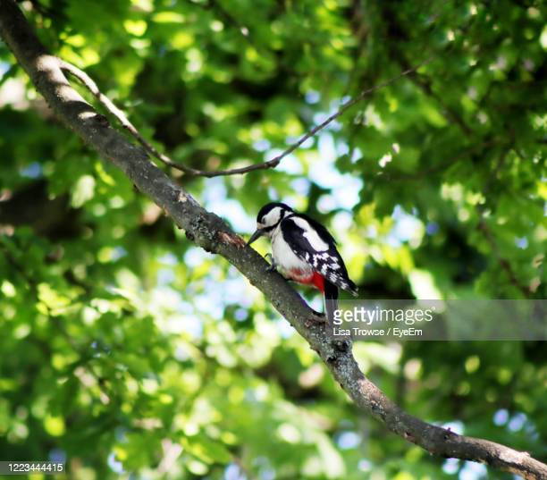 low angle view of bird perching on tree - esher stock pictures, royalty-free photos & images