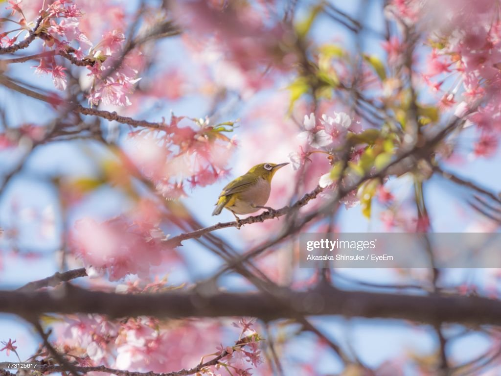 Low Angle View Of Bird Perching On Tree : Photo
