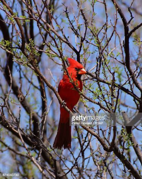 low angle view of bird - howard,_wisconsin stock pictures, royalty-free photos & images