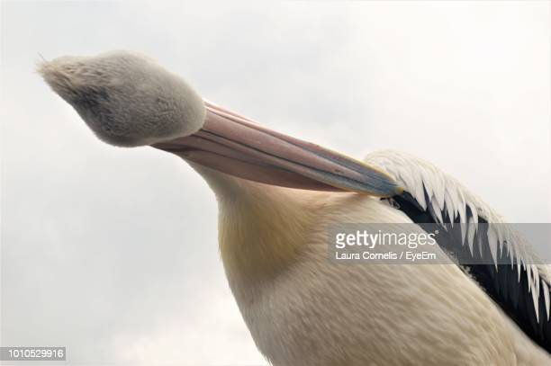 Low Angle View Of Bird Preening Against Sky