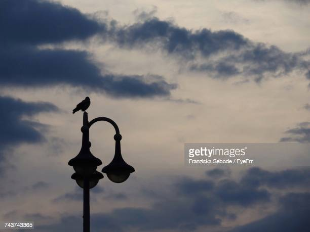Low Angle View Of Bird Silhouette On Lamp Against Sky
