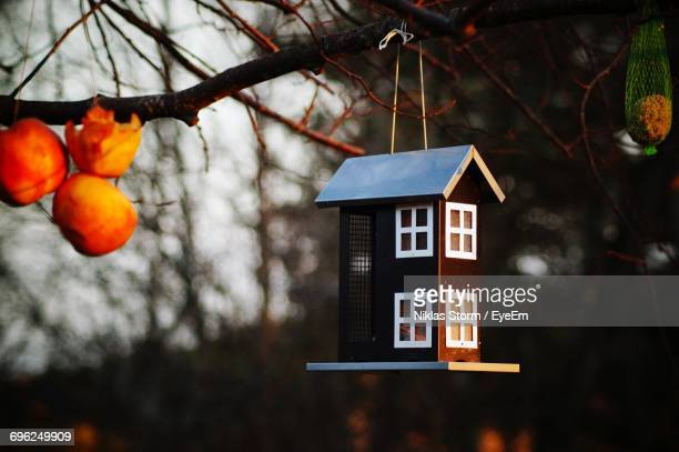 low angle view of birdhouse hanging from branch - birdhouse stock photos and pictures