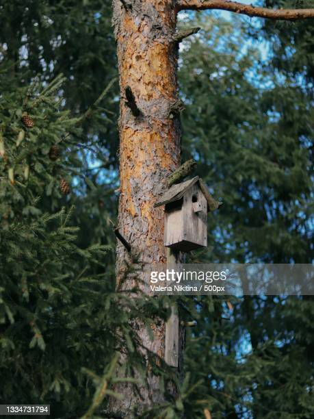 low angle view of birdhouse on tree trunk,russia - nikitina stock pictures, royalty-free photos & images