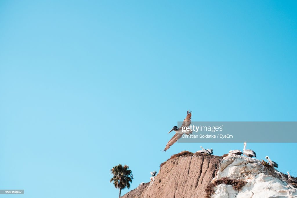 Low Angle View Of Birds Against Blue Sky : Stock-Foto