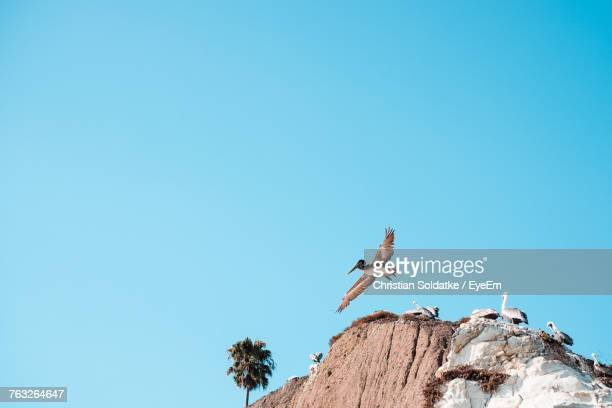 Low Angle View Of Birds Against Blue Sky