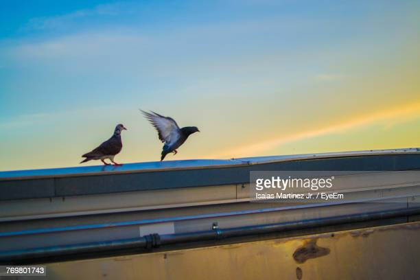 Low Angle View Of Birds Against Sky