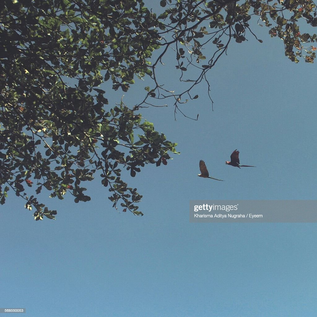 Low Angle View Of Birds And Tree Against Clear Sky : Stock Photo