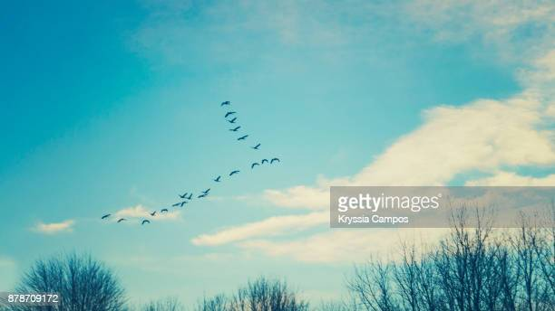 low angle view of birds flying against blue sky - 一月 ストックフォトと画像