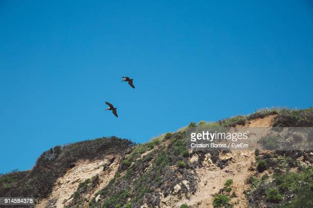 low angle view of birds flying against clear blue sky - bortes stock pictures, royalty-free photos & images