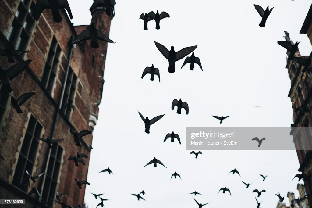 Low Angle View Of Birds Flying Against Clear Sky : Photo