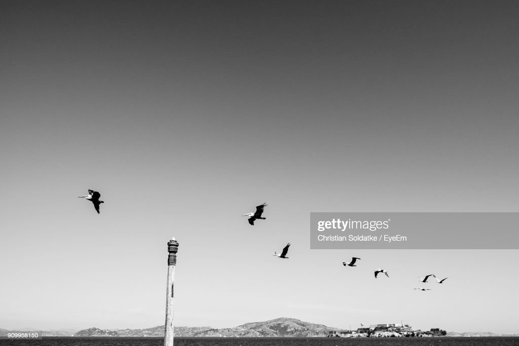 Low Angle View Of Birds Flying Against Clear Sky : Stock-Foto