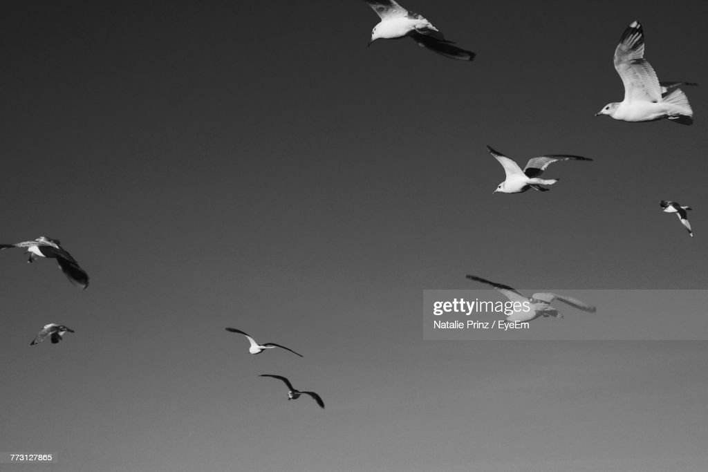 Low Angle View Of Birds Flying Against Sky : Photo