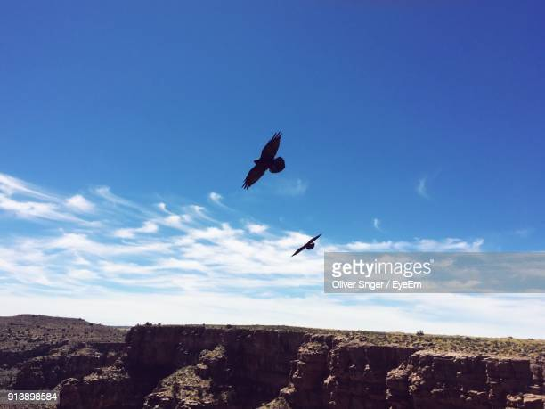low angle view of birds flying against sky - arizona bird stock pictures, royalty-free photos & images