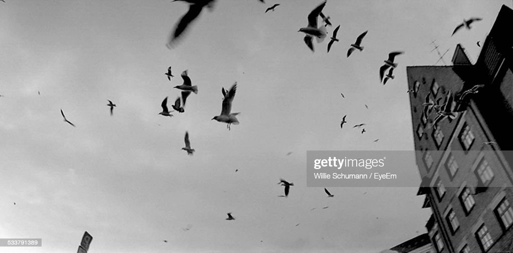 Low Angle View Of Birds Flying By Building Against Cloudy Sky : Foto stock