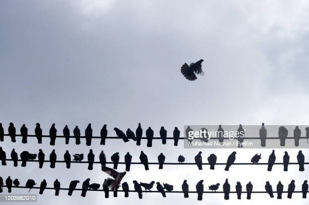 low angle view of birds flying in sky - muhamad nasrun stock pictures, royalty-free photos & images