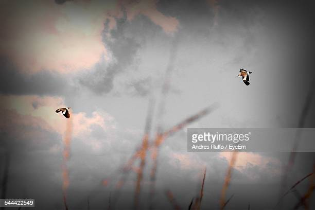 low angle view of birds flying in sky - andres ruffo stock pictures, royalty-free photos & images