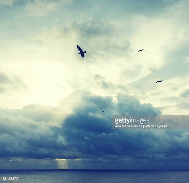Low Angle View Of Birds Flying Over Sea Against Cloudy Sky