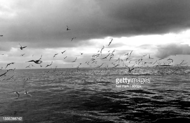 low angle view of birds flying over sea against sky,farne islands,united kingdom,uk - horizon over water stock pictures, royalty-free photos & images