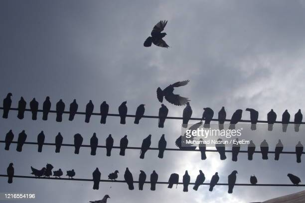low angle view of birds flying - muhamad nasrun stock pictures, royalty-free photos & images