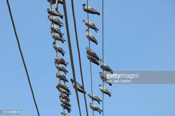 low angle view of birds on pole against clear blue sky - pigeon stock pictures, royalty-free photos & images