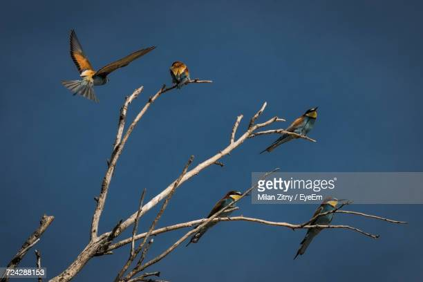 Low Angle View Of Birds On Tree Against Blue Sky