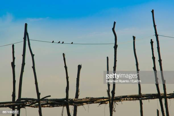 Low Angle View Of Birds On Wooden Post Against Sky