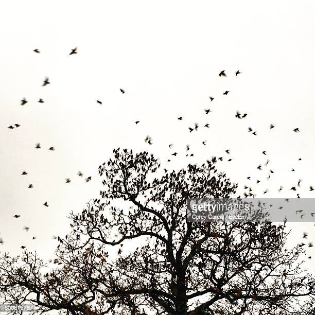 low angle view of birds over tree - bare tree stock pictures, royalty-free photos & images