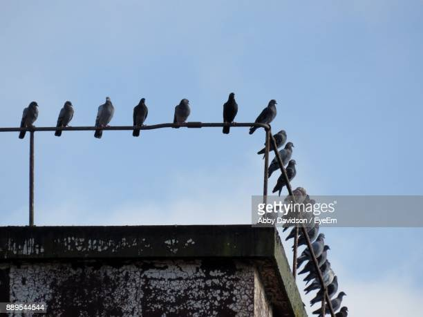 low angle view of birds perching against clear sky - perching stock photos and pictures